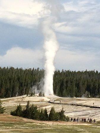 Yellowstone Wildlife Safari Tour: Old Faithful