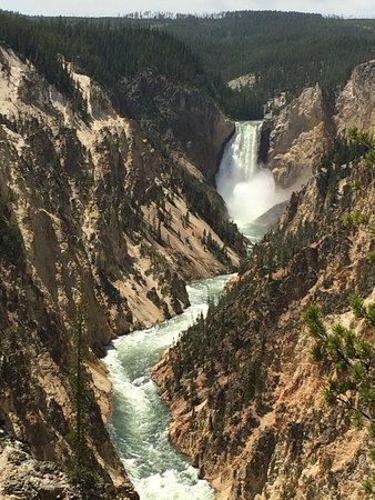 Yellowstone Wildlife Safari Tour: Artists Point @ Grand Canyon