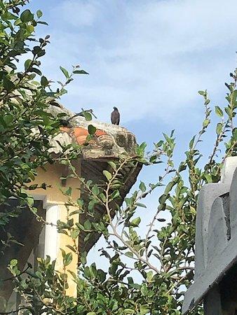 The Bird House Hoian