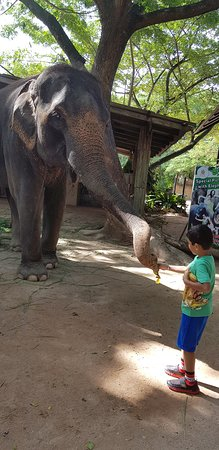Elephant Jungle Sanctuary: Elephant feeding