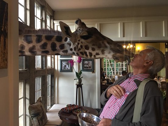 Giraffe Manor: Giraffe Kisses - the only way to start your day