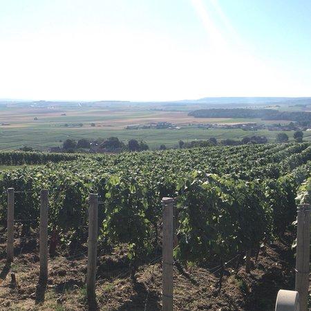 Foto de La Vigne du Roy Champagne Day Tours