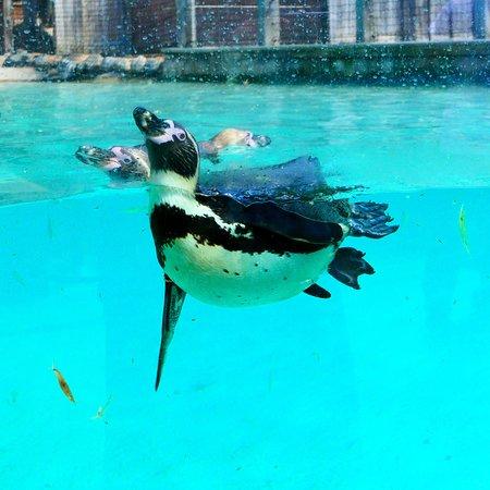 ZSL London Zoo Lodges: Humbolt penguin