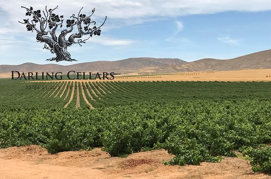 Darling, South Africa: Our Bush Vine Vineyards