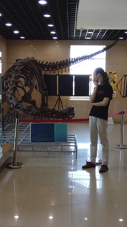 Geological Museum of China: The Shandong beast replica!