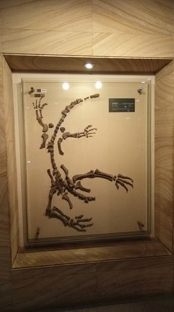 Geological Museum of China: I`ve lost my head after this one