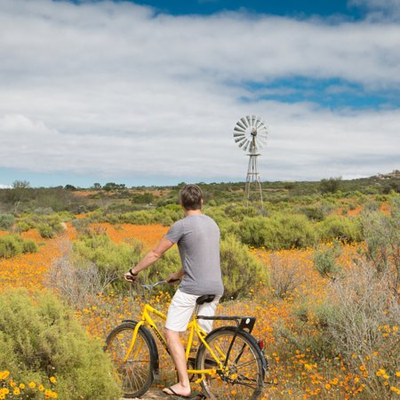 Namaqua Flower Camps: Head off on a bike ride along the daisy paths in Skilpad