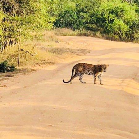 Фотография Go Yala Safari Tours