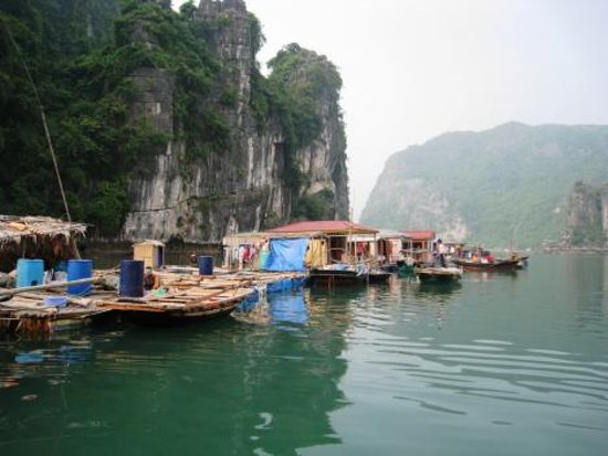 Focus Indochina: Dragon Bay Cruises - Indochine Junk