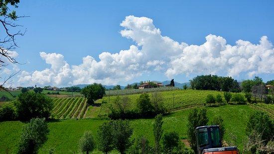 Family Farms of Montefalco: View on the farm