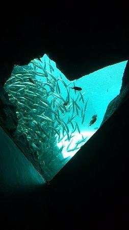 Bilde fra Joetsu Aquarium Umigatari