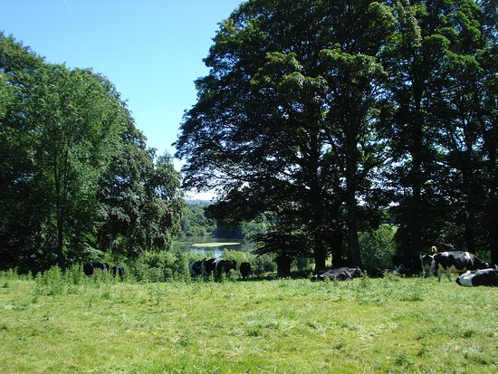 Clumber Park: Beautiful trees and plenty of them.