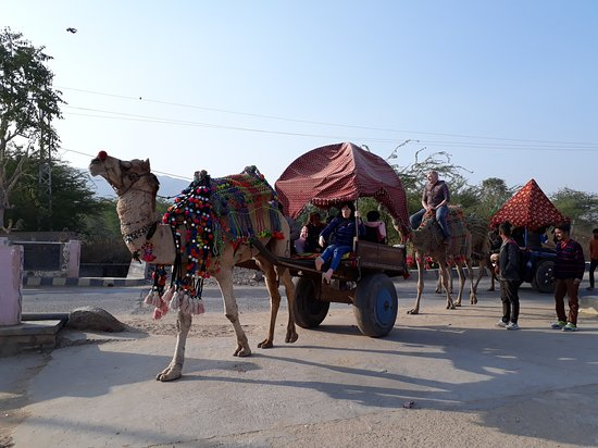 Ravi India Tours: Camel card at Pushkar, Rajasthan (India)