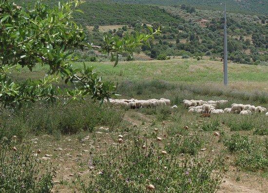 Az. agricola Pab'e is tellasa: il nostro territorio