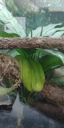 The Living Rainforest: 26..