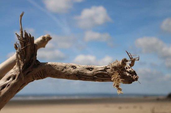 Brechfa, UK: Beach Dragon.