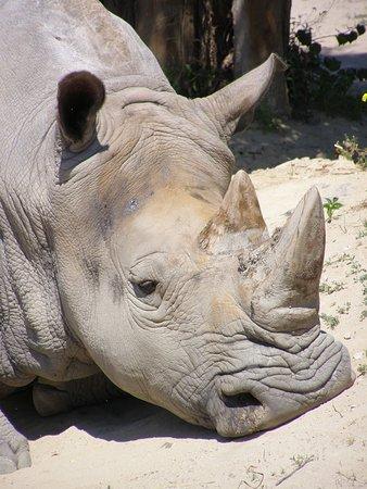 Zoo: Nosorožec ...