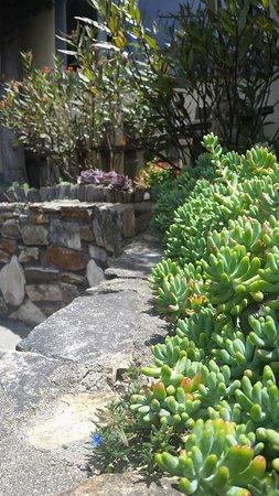 The Tuck Box: Succulents