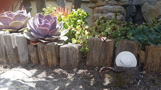 The Tuck Box: Succulent garden