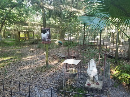 Big Cat Rescue: Savannah cats