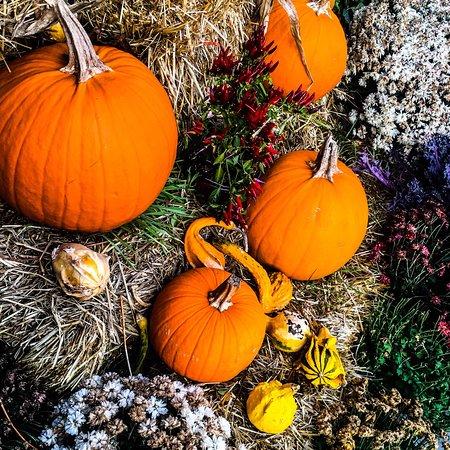 Bilde fra Harvest on Hudson