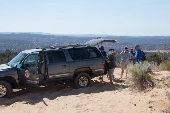 Dreamland Safari Tours: The safari vehicle. Very comfortable