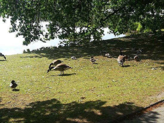Kiel Botanical Gardens 3