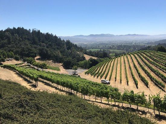Newton Vineyard: The view!!