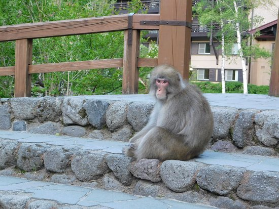 Kamikochi Hotel Shirakabaso: Welcoming Concierge