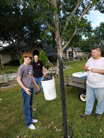 Yoakum, Техас: 2017 Sutton Mott Harvest