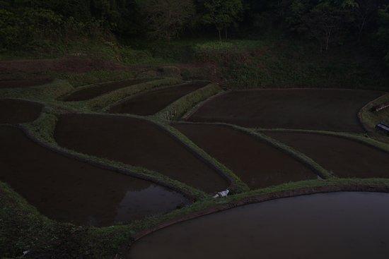 Motegi-machi, اليابان: 入郷石畑の棚田;日の出前