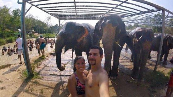 Elephant Jungle Sanctuary Phuket: SIKI from Panama