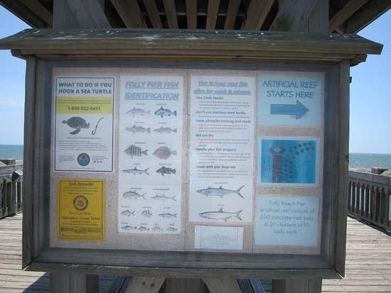 Folly Beach Fishing Pier: Likely fish caught from the pier and man-made reef map