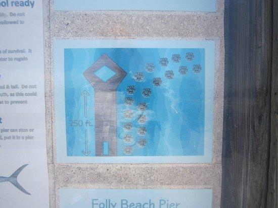 Folly Beach Fishing Pier: Man-made reef