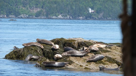 Jolly Breeze Tall Ship Whale Adventures: Seals sunning themselves
