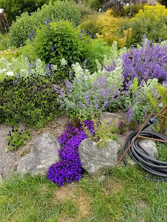 Mendocino coast botanical gardens fort bragg 2018 - Mendocino coast botanical gardens ...