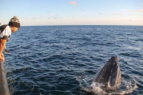 Naturaliste Charters: Friendly Humpbacks!
