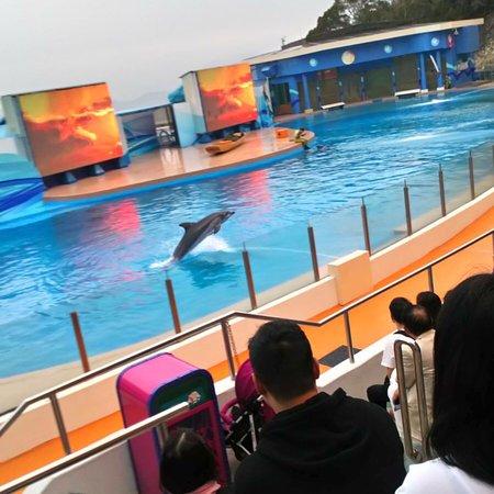 Foto de Ocean Park