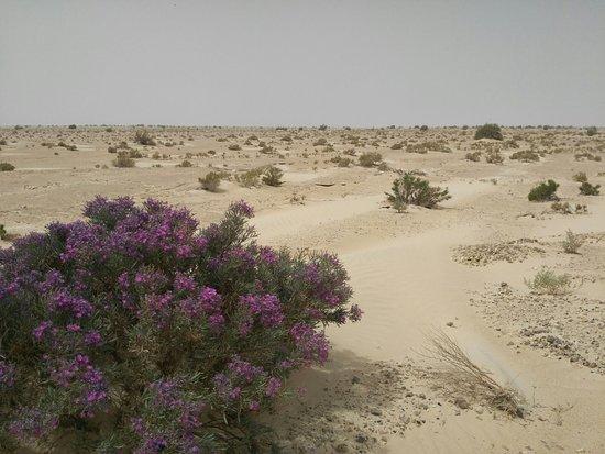 Chott El Djerid: También tiene desierto