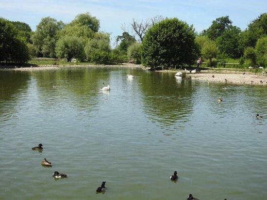 WWT Slimbridge Wetland Centre: Reserve