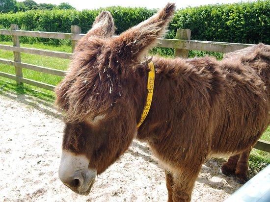 Bilde fra The Donkey Sanctuary