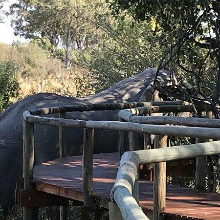 North-West District, Botsuana: photo0.jpg