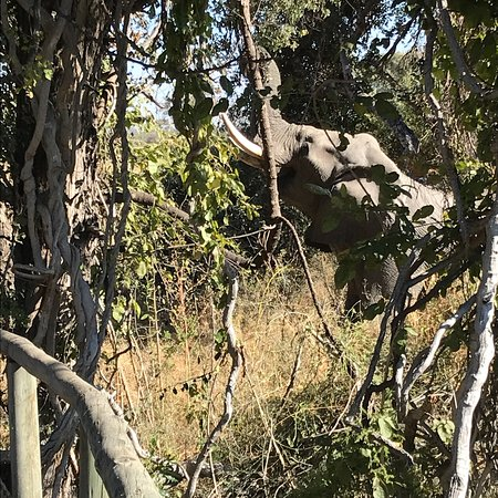 North-West District, Botsuana: photo1.jpg