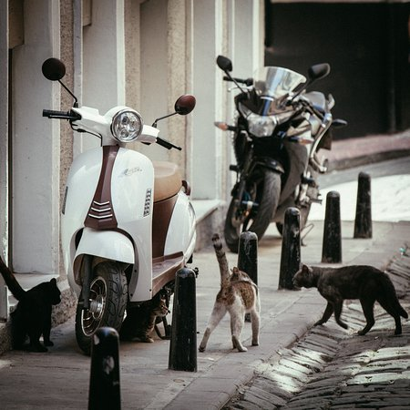Georges Hotel Galata: Georges is animal friendly. We feed our kitties and doggies, provide them fresh water at all tim