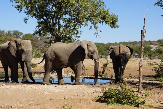 Ongava Tented Camp: Elephants circling the water hole while we enjoyed lunch.