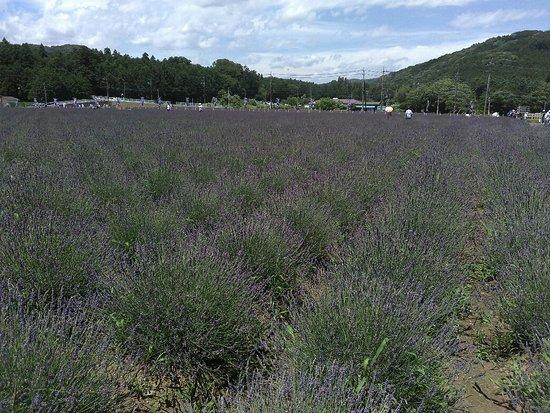 Ranzanmachi Sennen no Sono Lavender Field: メインのラベンダー畑
