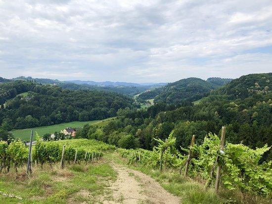 Weingut - Ferienhaus Sonja Rohrbacher: Der Vital-Wanderweg führt direkt an unserem Weingut vorbei und bietet eine wunderschöne Aussicht