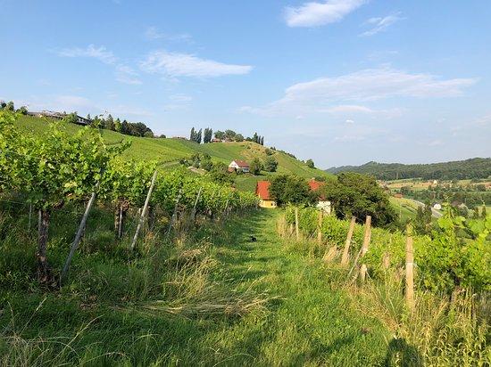 Weingut - Ferienhaus Sonja Rohrbacher: Einige sehr gute Buschensnhänke sind in unmittelbarer Umgebung und auch zu Fuss gut erreichbar.