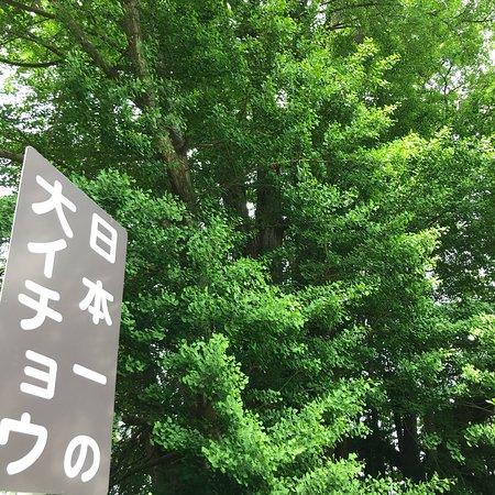 Kitakanegasawa no Oicho