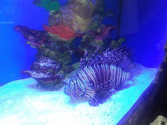 Oceanarium Sea Fairy Tale: Океанариум
